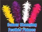 Colour Changing plumes with stand (4 plumes)